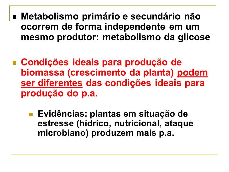 Metabolismo primário e secundário não ocorrem de forma independente em um mesmo produtor: metabolismo da glicose