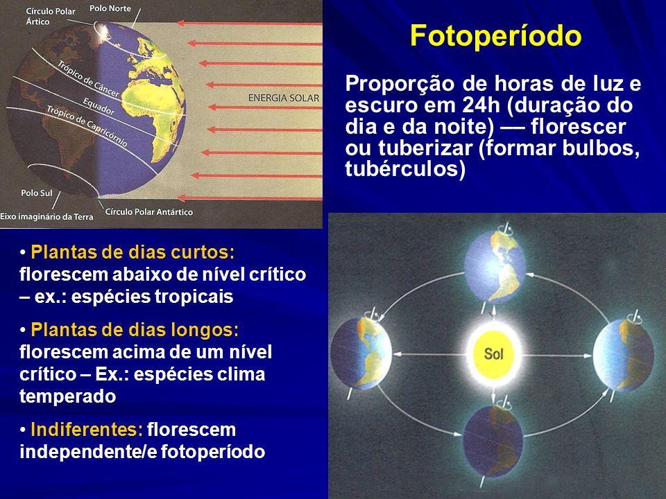 Fotoperíodo Proporção de horas de luz e escuro em 24h (duração do dia e da noite) –– florescer ou tuberizar (formar bulbos, tubérculos)