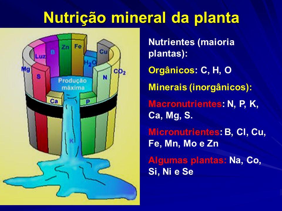 Nutrição mineral da planta