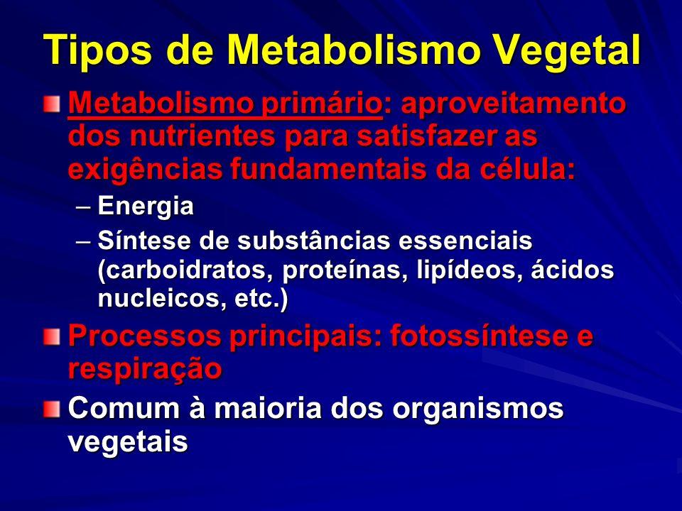 Tipos de Metabolismo Vegetal
