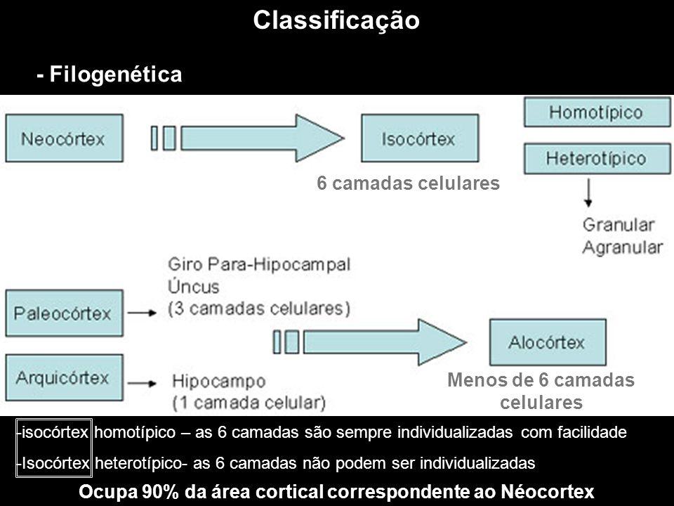Classificação - Filogenética 6 camadas celulares