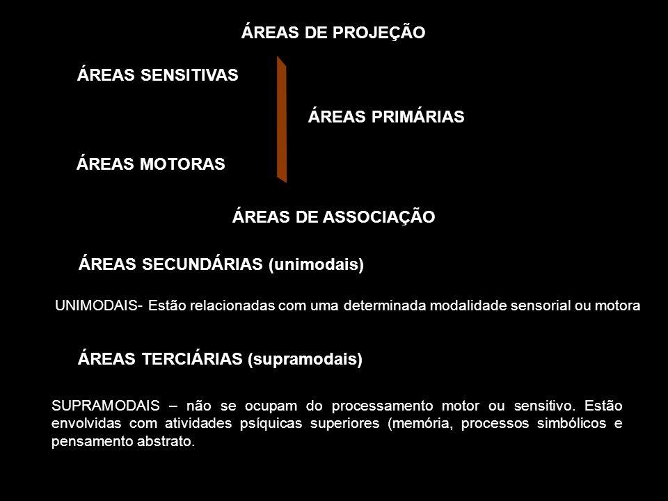 ÁREAS SECUNDÁRIAS (unimodais) ÁREAS TERCIÁRIAS (supramodais)