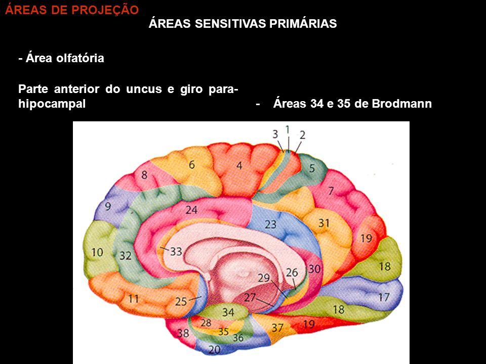 ÁREAS SENSITIVAS PRIMÁRIAS