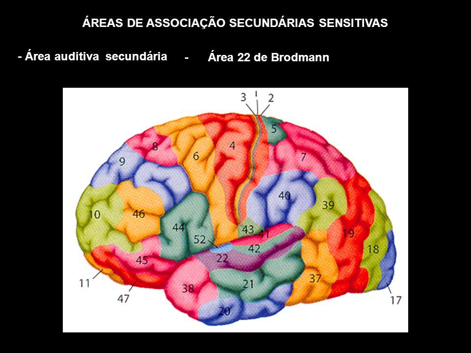 ÁREAS DE ASSOCIAÇÃO SECUNDÁRIAS SENSITIVAS
