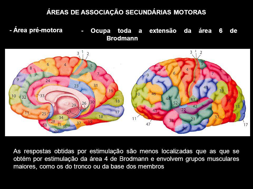 ÁREAS DE ASSOCIAÇÃO SECUNDÁRIAS MOTORAS