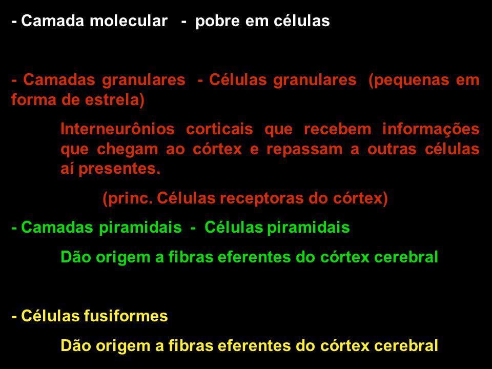 (princ. Células receptoras do córtex)