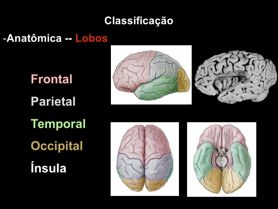 Parietal Temporal Occipital Ínsula Classificação Anatômica -- Lobos