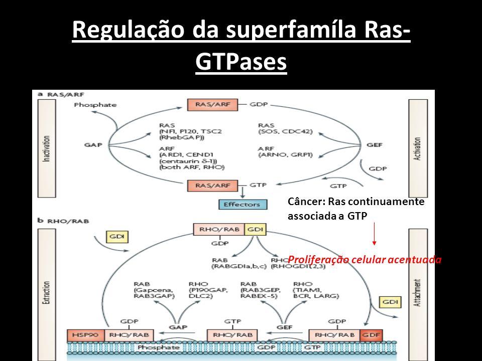 Regulação da superfamíla Ras-GTPases
