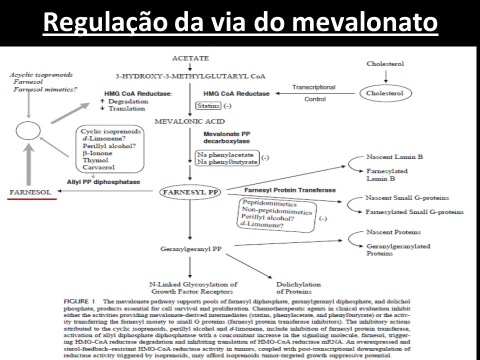 Regulação da via do mevalonato