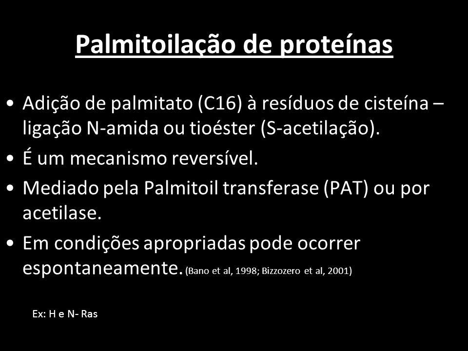Palmitoilação de proteínas