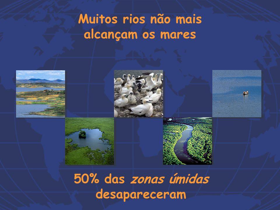 50% das zonas úmidas desapareceram