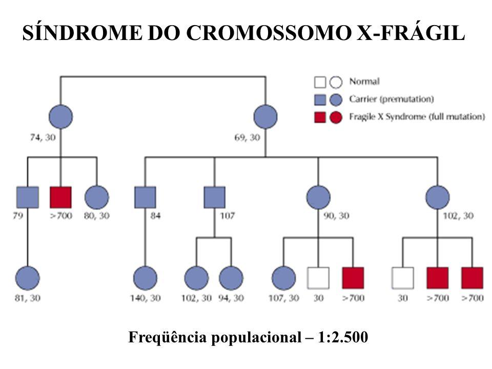 SÍNDROME DO CROMOSSOMO X-FRÁGIL Freqüência populacional – 1:2.500