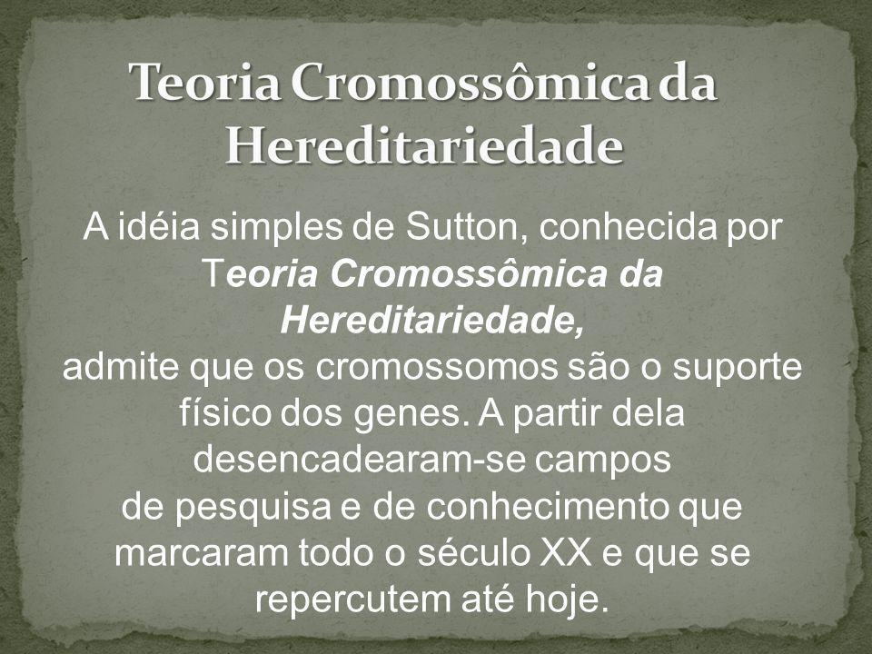 Teoria Cromossômica da Hereditariedade