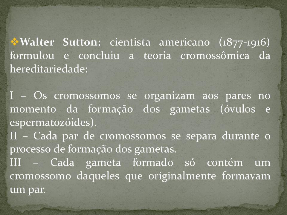 Walter Sutton: cientista americano (1877-1916) formulou e concluiu a teoria cromossômica da hereditariedade: