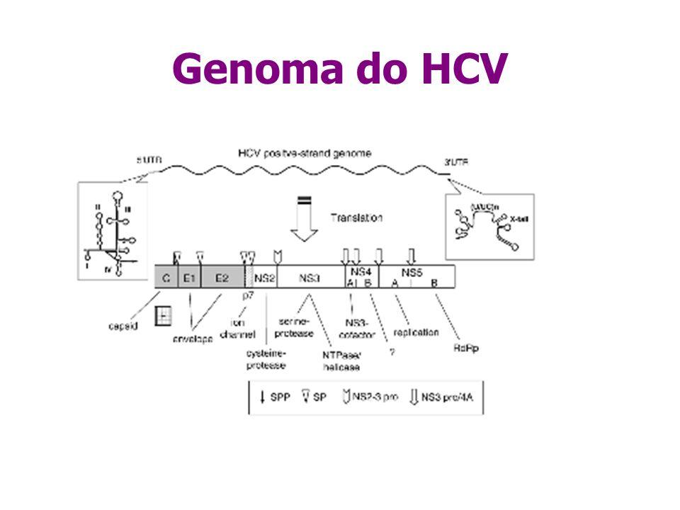 Genoma do HCV Caracteristica importante do genoma é a grande variabilidade genética.