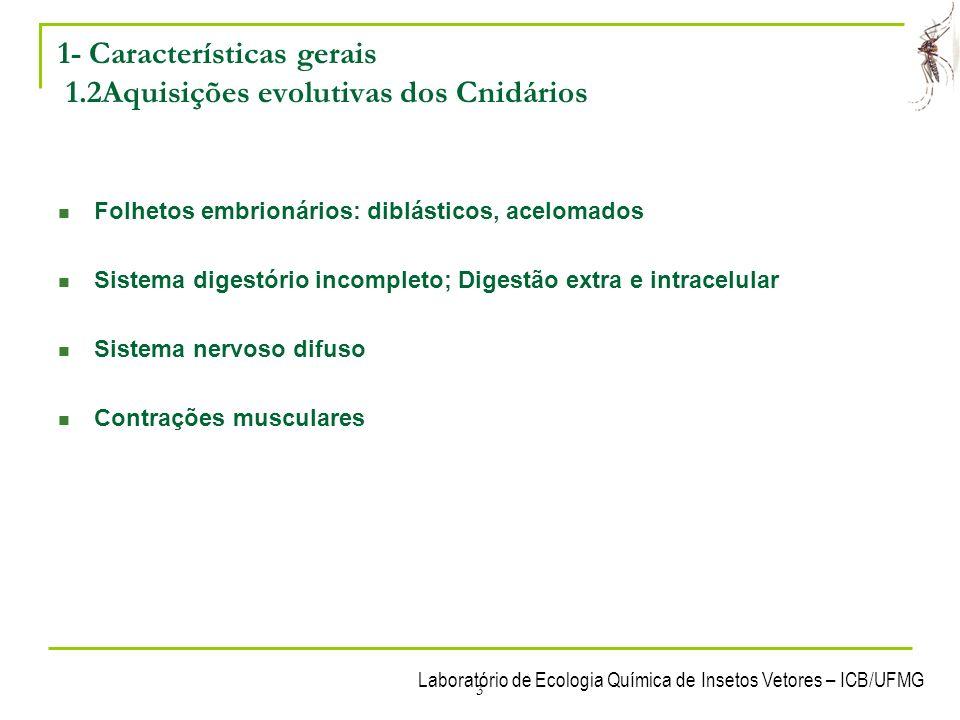 1- Características gerais 1.2Aquisições evolutivas dos Cnidários