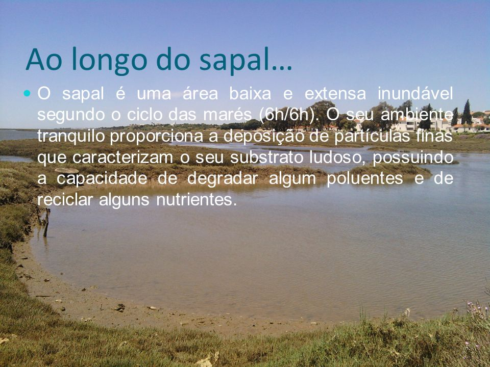Ao longo do sapal…