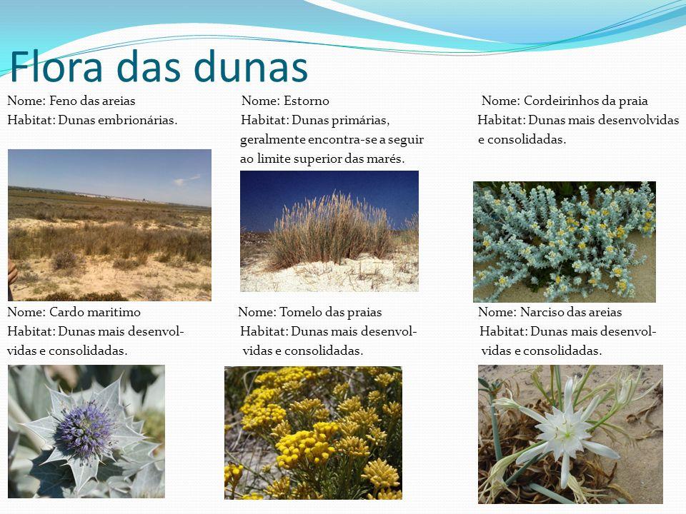 Flora das dunas