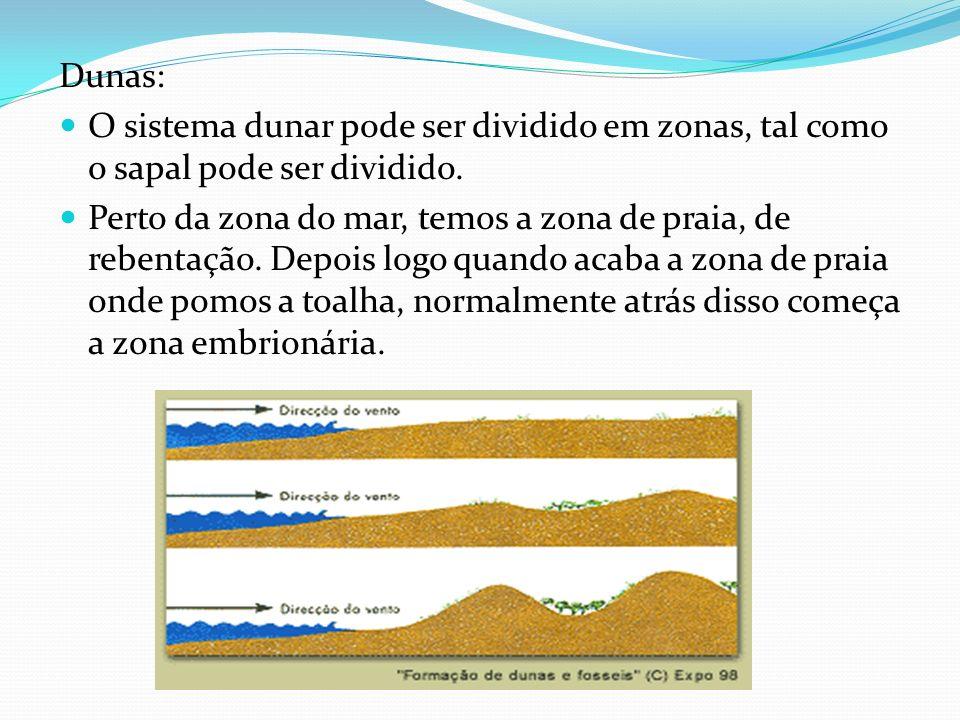 Dunas: O sistema dunar pode ser dividido em zonas, tal como o sapal pode ser dividido.