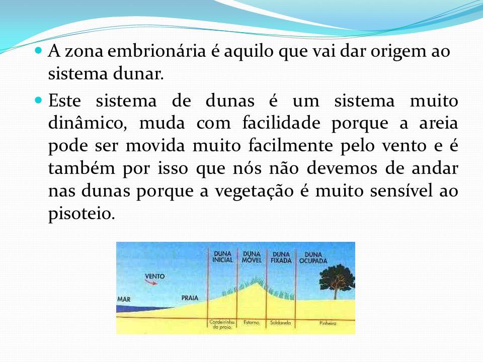 A zona embrionária é aquilo que vai dar origem ao sistema dunar.