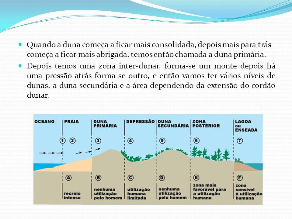 Quando a duna começa a ficar mais consolidada, depois mais para trás começa a ficar mais abrigada, temos então chamada a duna primária.