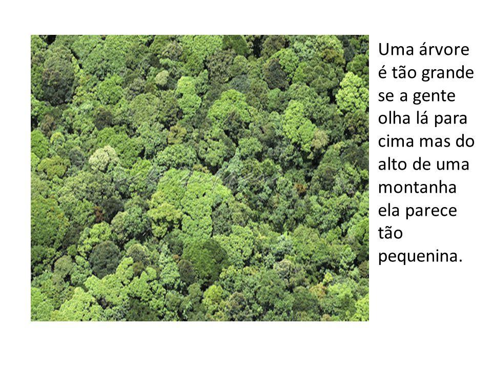 Uma árvore é tão grande se a gente olha lá para cima mas do alto de uma montanha ela parece tão pequenina.