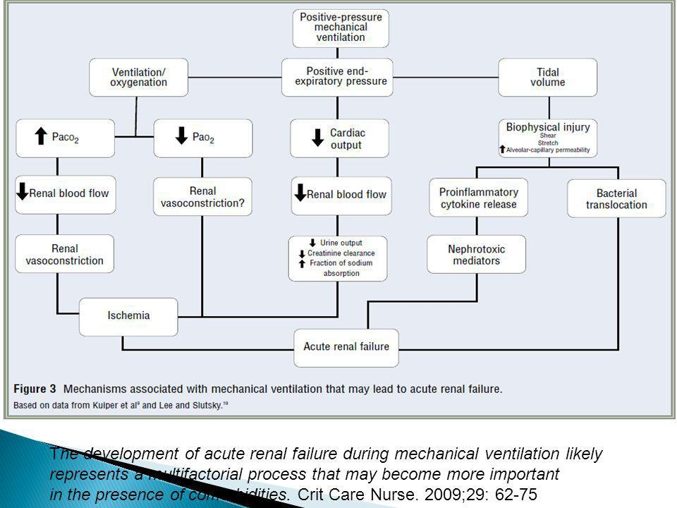 The development of acute renal failure during mechanical ventilation likely represents a multifactorial process that may become more important