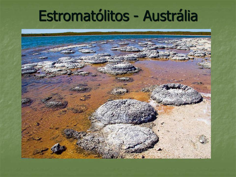Estromatólitos - Austrália