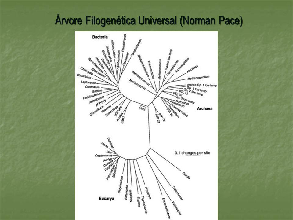 Árvore Filogenética Universal (Norman Pace)
