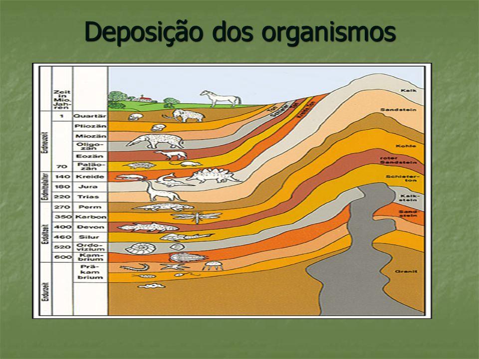 Deposição dos organismos