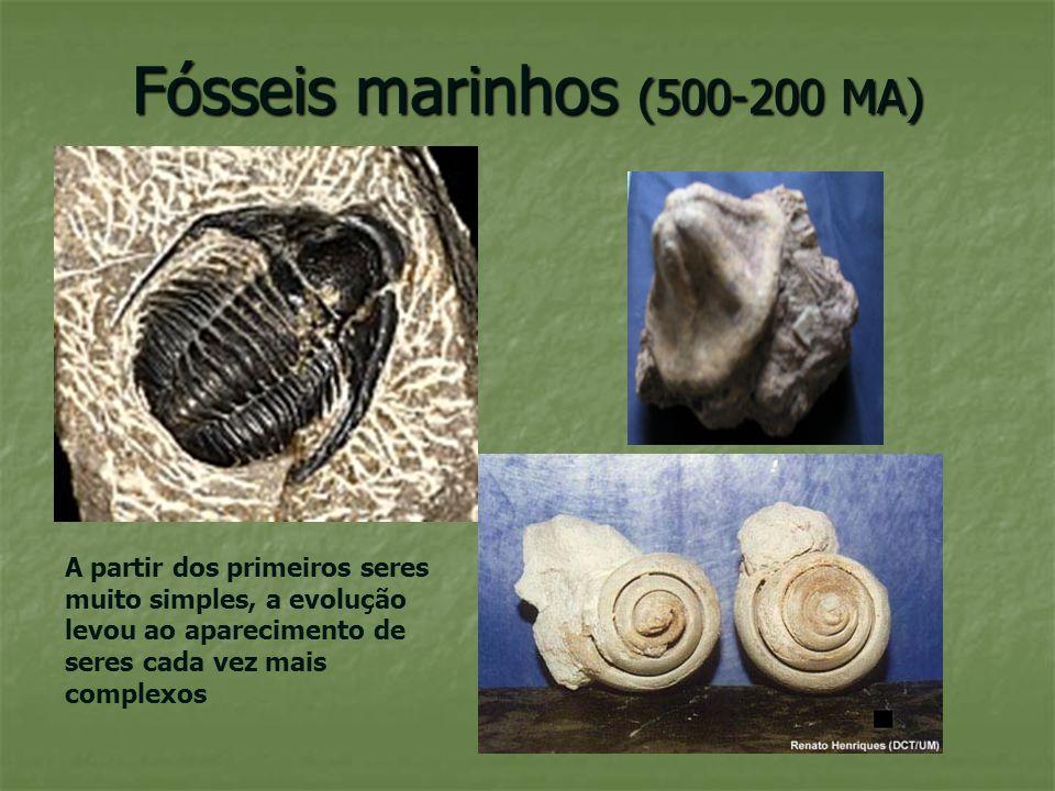 Fósseis marinhos (500-200 MA)