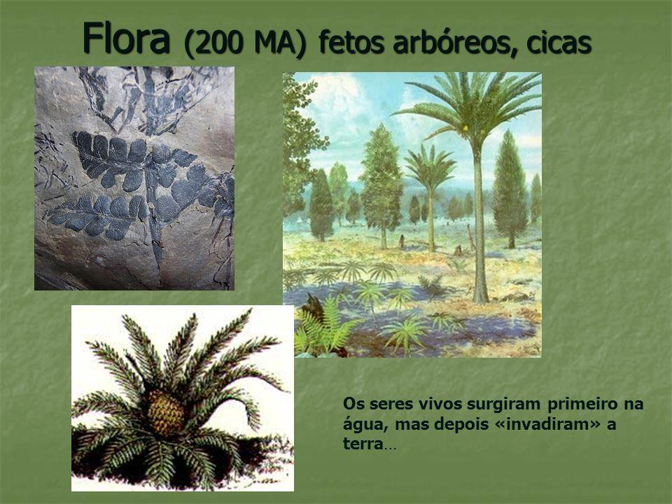 Flora (200 MA) fetos arbóreos, cicas