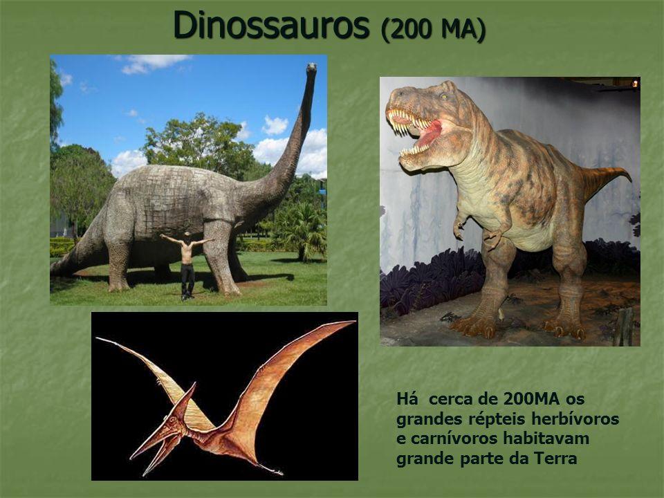 Dinossauros (200 MA) Há cerca de 200MA os grandes répteis herbívoros e carnívoros habitavam grande parte da Terra.