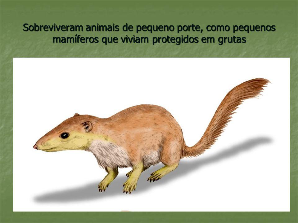Sobreviveram animais de pequeno porte, como pequenos mamíferos que viviam protegidos em grutas