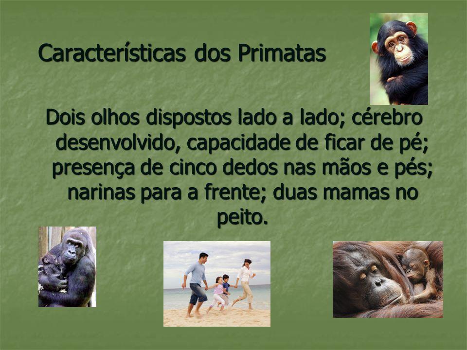 Características dos Primatas