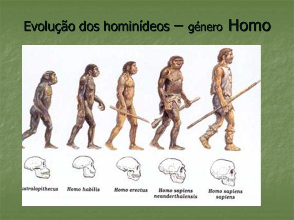 Evolução dos hominídeos – género Homo