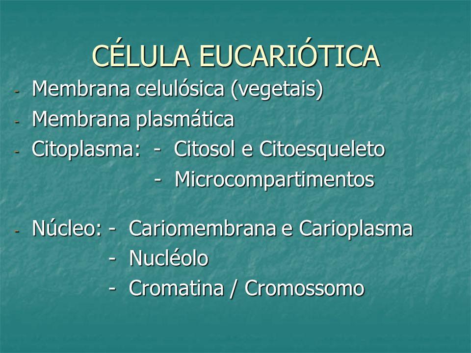 CÉLULA EUCARIÓTICA Membrana celulósica (vegetais) Membrana plasmática