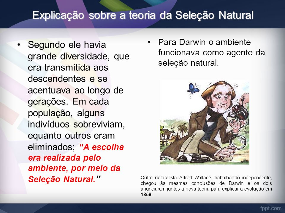 Explicação sobre a teoria da Seleção Natural