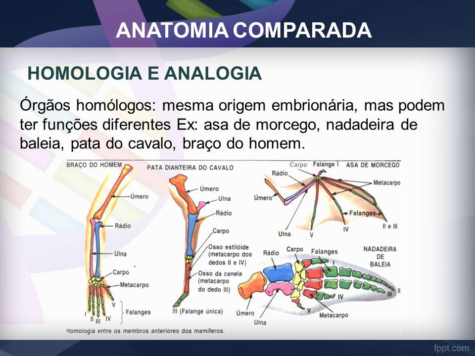 ANATOMIA COMPARADA HOMOLOGIA E ANALOGIA