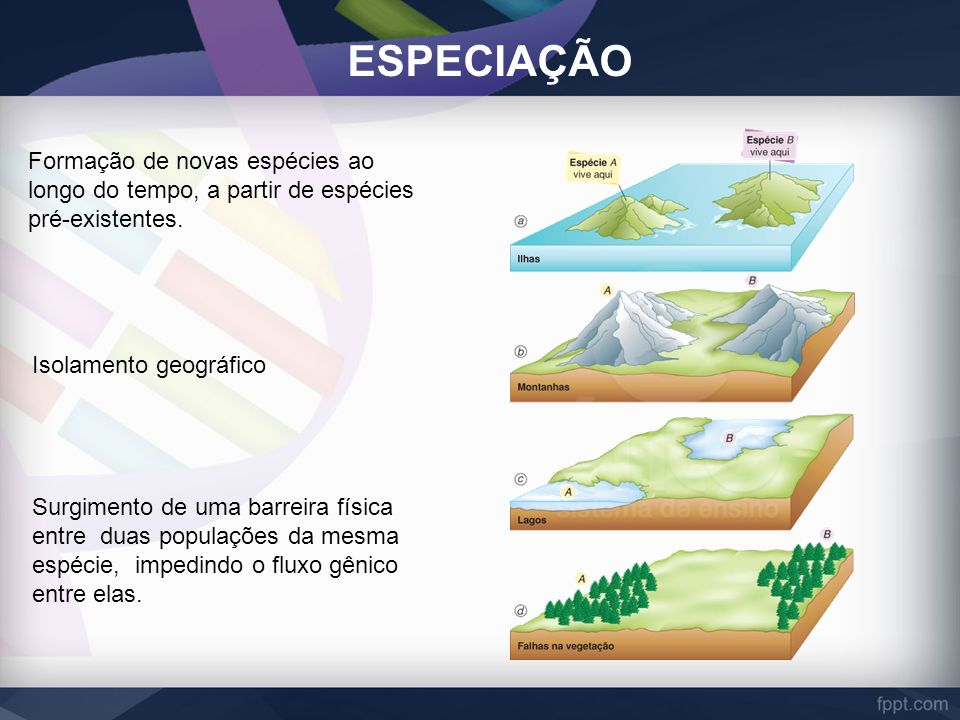 ESPECIAÇÃO Formação de novas espécies ao longo do tempo, a partir de espécies pré-existentes. Isolamento geográfico.