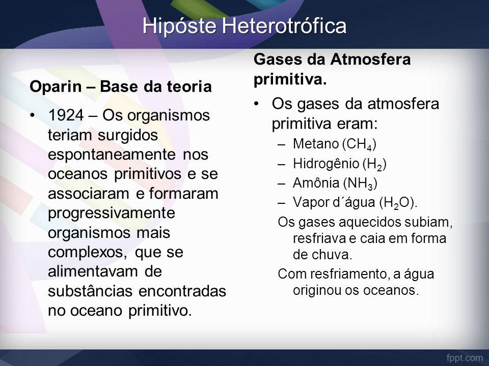 Hipóste Heterotrófica
