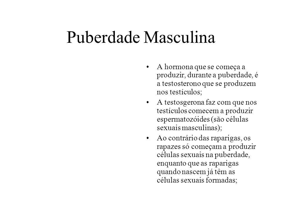 Puberdade Masculina A hormona que se começa a produzir, durante a puberdade, é a testosterono que se produzem nos testículos;