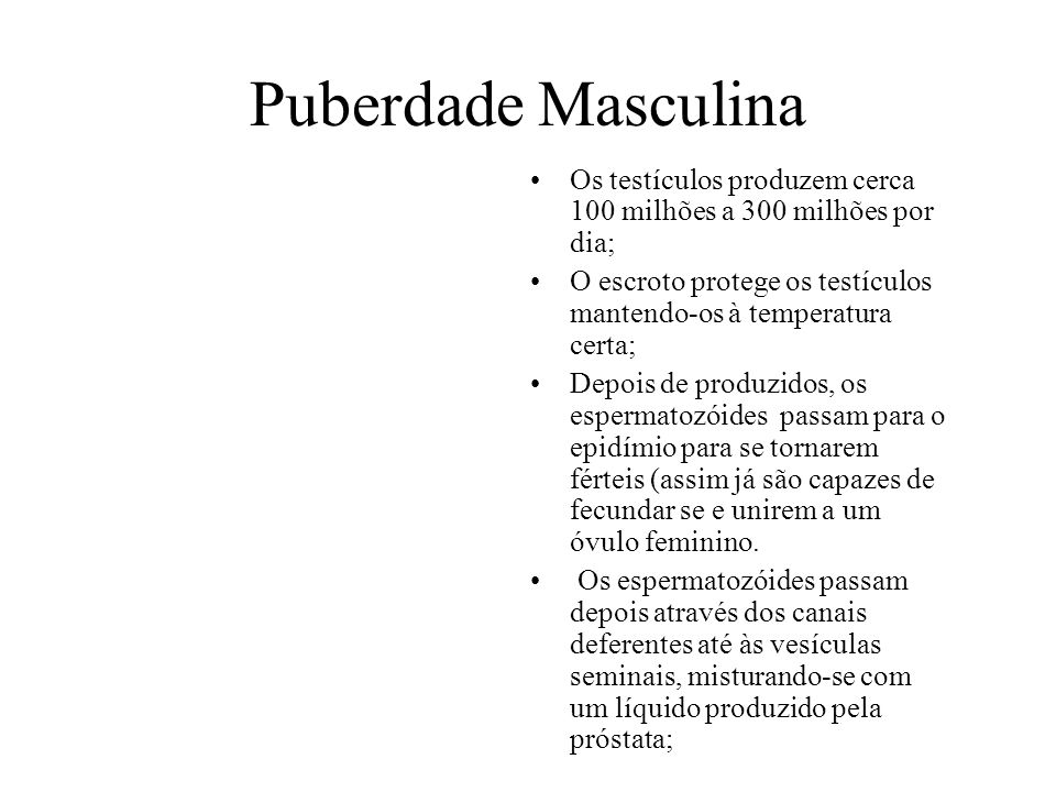 Puberdade Masculina Os testículos produzem cerca 100 milhões a 300 milhões por dia; O escroto protege os testículos mantendo-os à temperatura certa;
