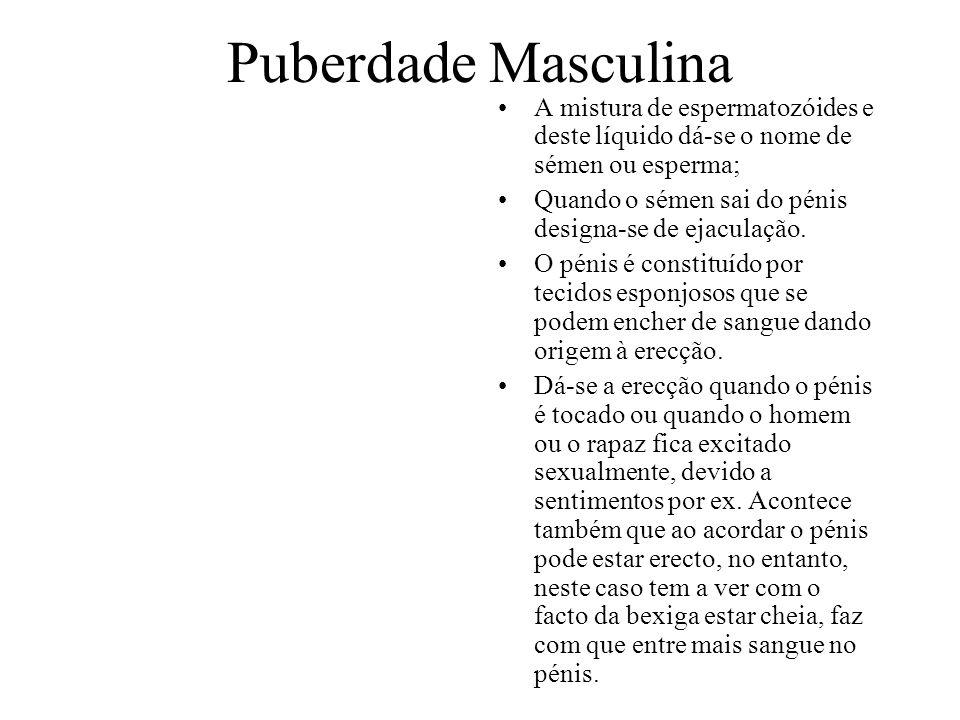 Puberdade Masculina A mistura de espermatozóides e deste líquido dá-se o nome de sémen ou esperma;