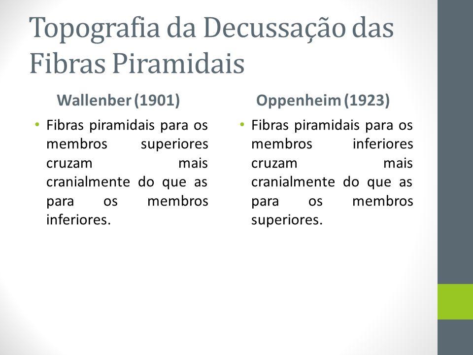 Topografia da Decussação das Fibras Piramidais