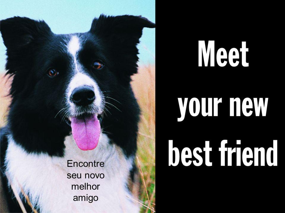 Encontre seu novo melhor amigo