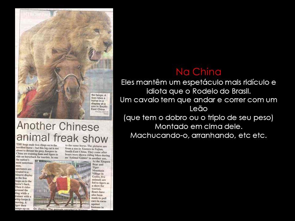 Na ChinaEles mantêm um espetáculo mais ridículo e idiota que o Rodeio do Brasil. Um cavalo tem que andar e correr com um Leão.