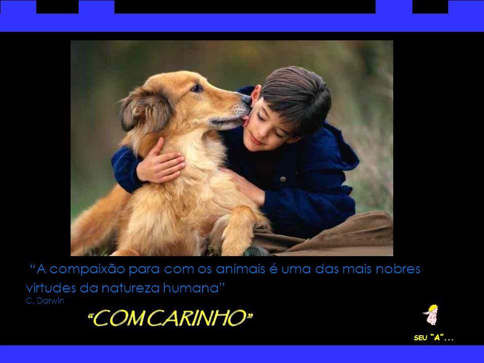A compaixão para com os animais é uma das mais nobres virtudes da natureza humana C. Darwin