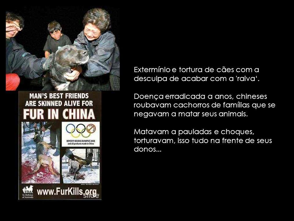 Extermínio e tortura de cães com a desculpa de acabar com a raiva'.