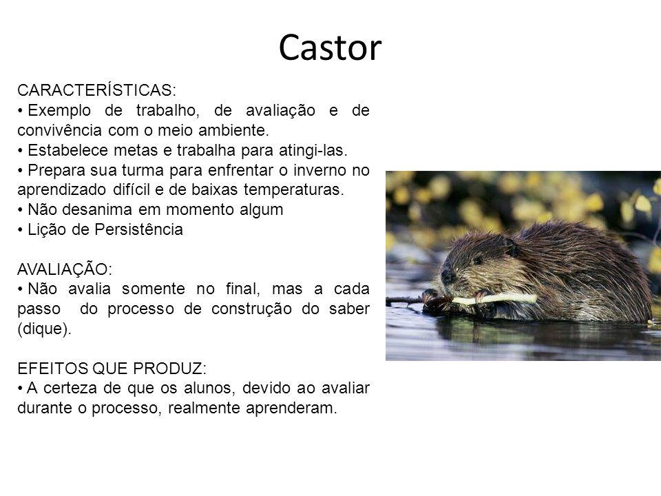 Castor CARACTERÍSTICAS: